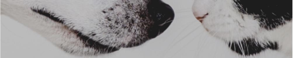 Farmacia Fuentelucha | Higiene bucal